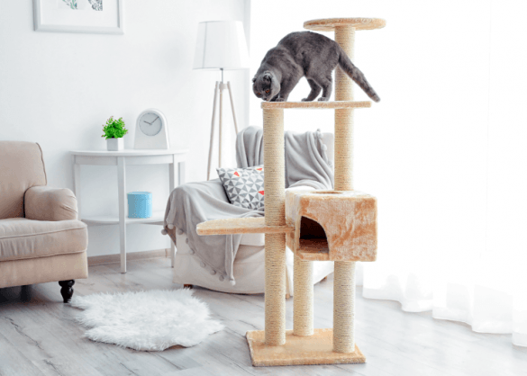 Design Voor Katten : Het mooiste design voor je kat beestig be