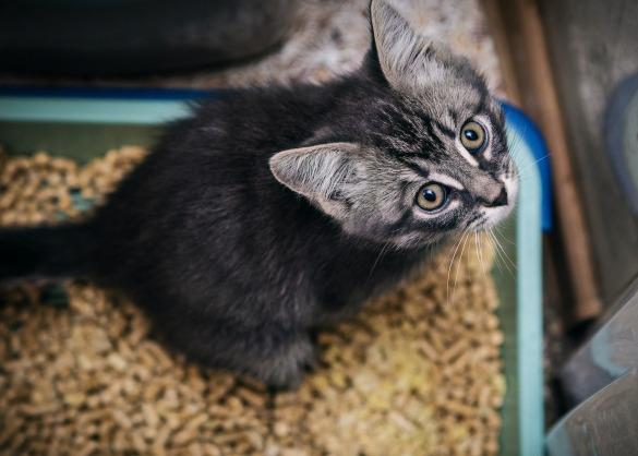 Kitten zit in kattenbak