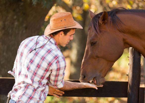 Man met cowboyhoed voedert paard uit de hand