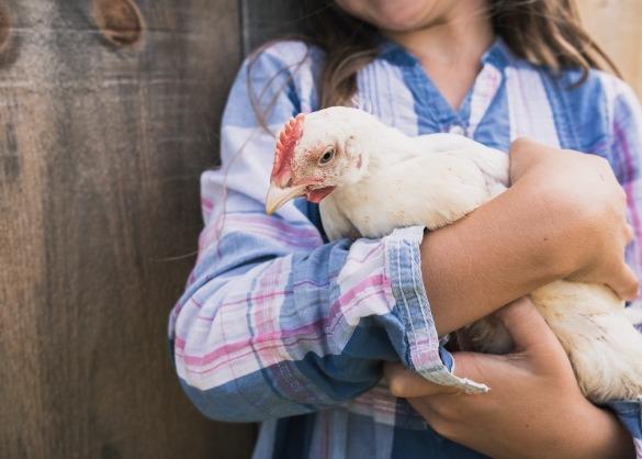 Meisje houdt witte kip in haar armen