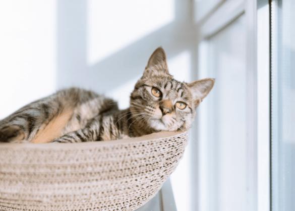 10 creatieve slaapplekken voor je kat