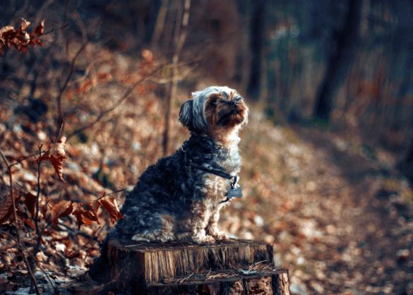 Allergisch? Met deze 5 honden word je wél dikke vrienden