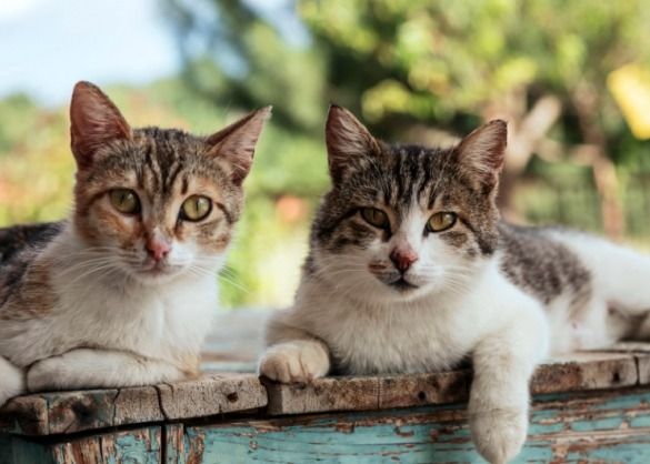 Allergisch? Met deze 5 katten kan je wél samenleven!