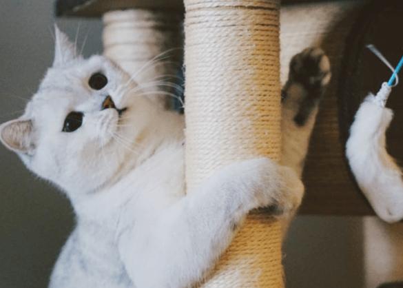 Alles wat je moet weten over de kattenbak