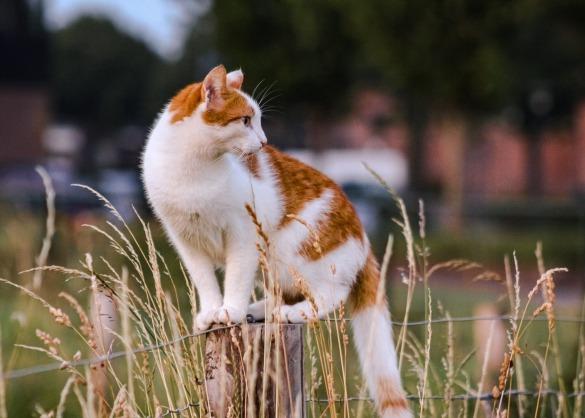 Bestaan er planten die giftig zijn voor katten?