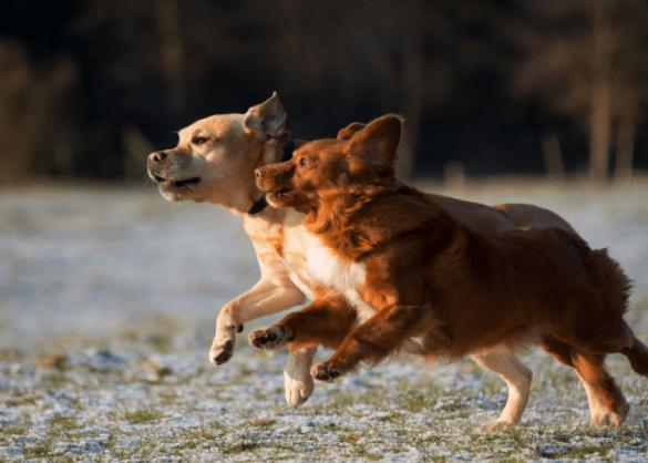 De populairste hondennamen van 2018