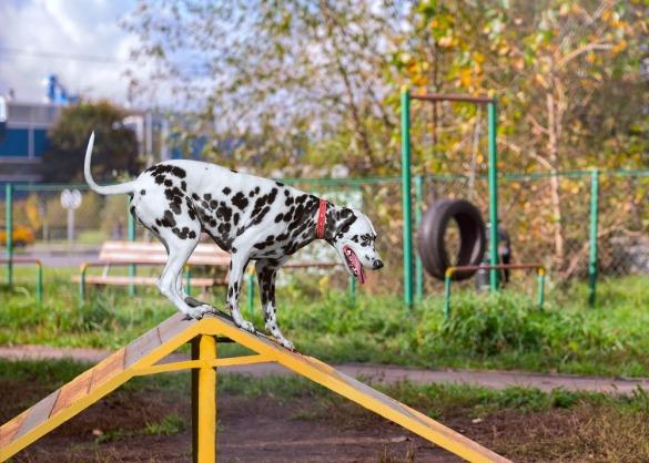 DIY: Zo bouw je een hondenspeeltuin