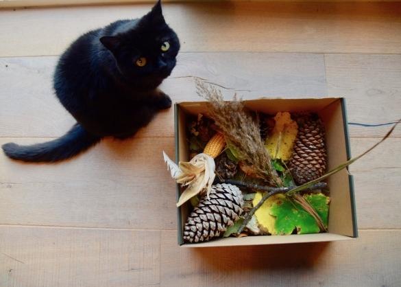 Zwarte kat bij herfstdoos