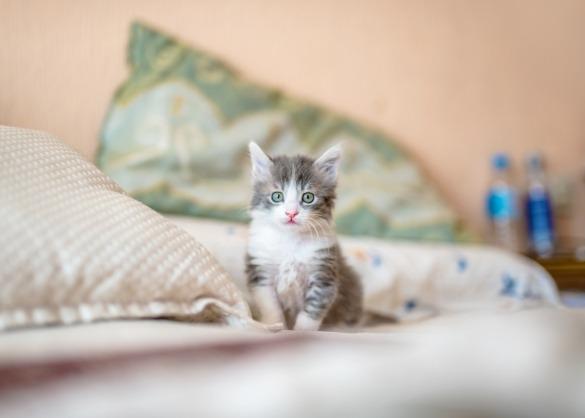 Eerste kat