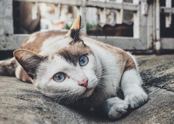 Gevlekte kat in de zetel