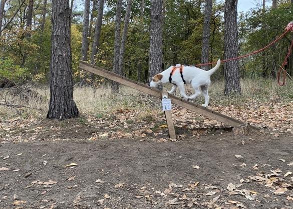 Hond op wip