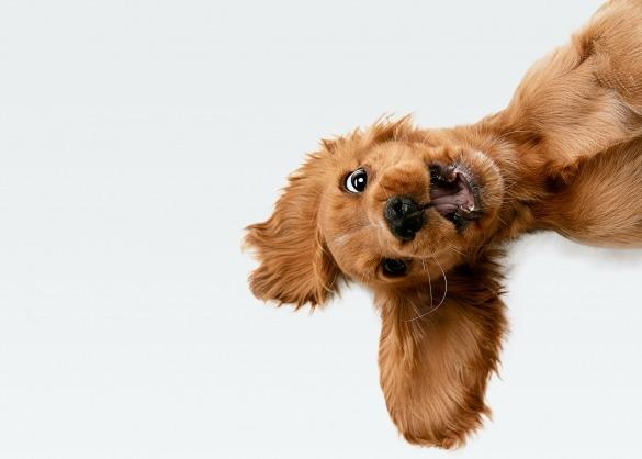 Gekke hond met lange oren komt piepen aan zijkant frame