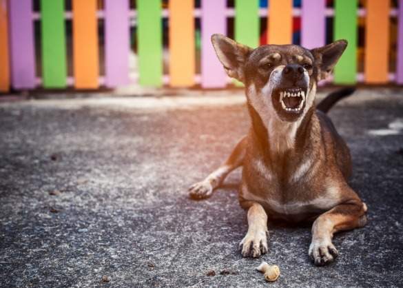 Grommende hond