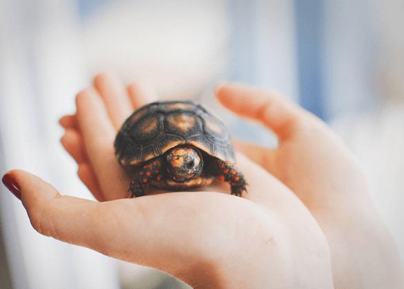 Schildpadje in de hand.