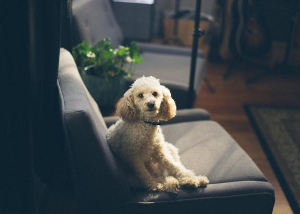 Heeft mijn hond een geheugen?