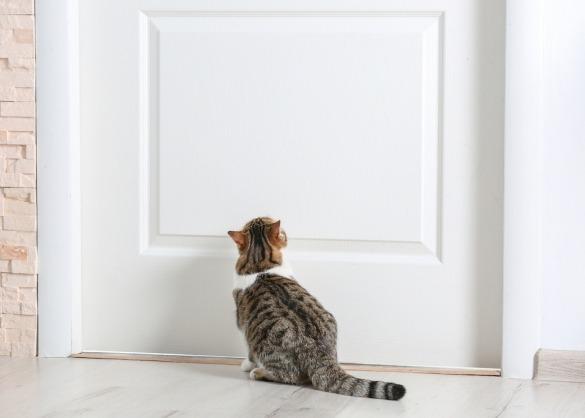 hoe_lang_moet_je_een_nieuwe_kat_binnen_houden