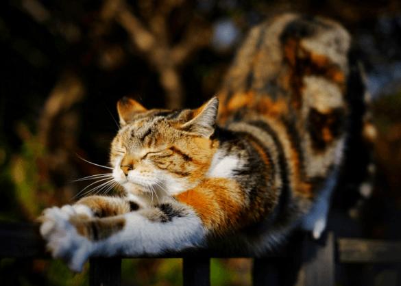 stretchende kat