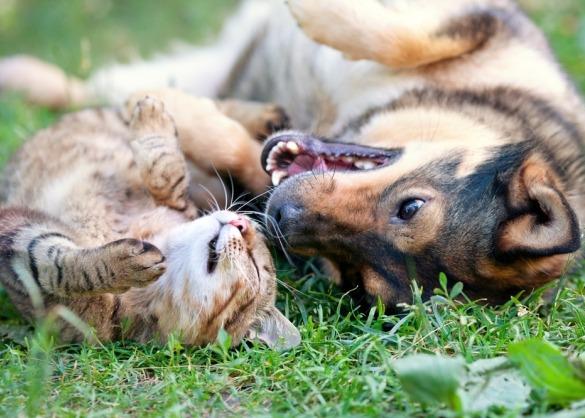Hond en kat spelen