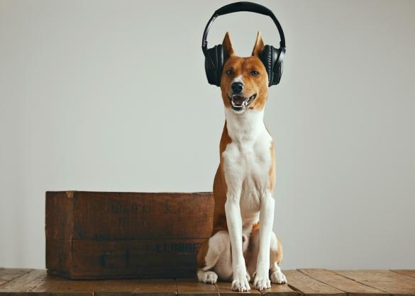Hond met hoofdtelefoon op kop