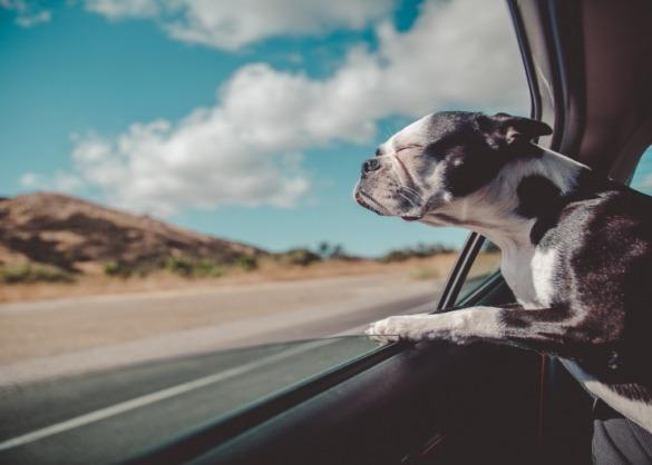 hond uit het raam