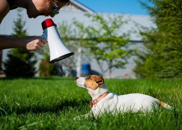 Jack Russel terriër ligt in het gras en wordt geroepen met megafoon