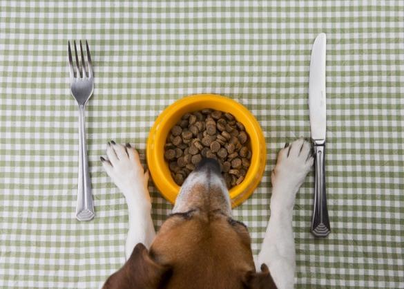 Hond zit aan tafel met bakje brokken en mes en vork