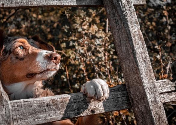 hondennagels knippen, hoe doe ik dat?
