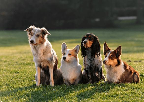 Honden op een rij.