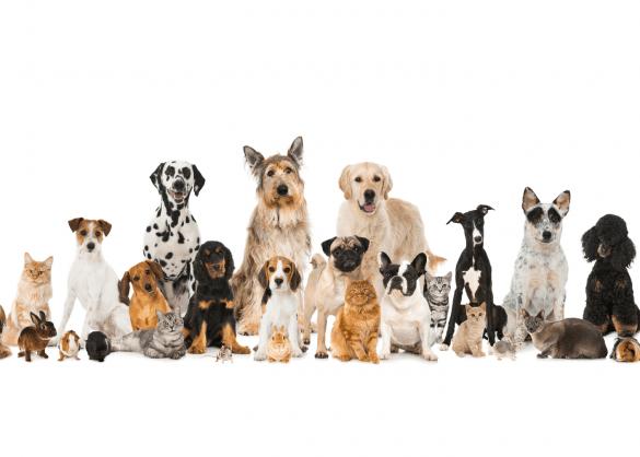 Allerlei verschillende soorten huisdieren