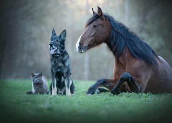 Kat, hond en paard in een weide