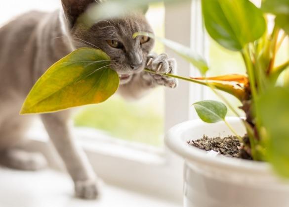 Kat knabbelt aan plant op vensterbank
