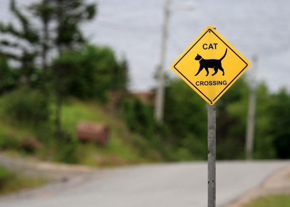 Verkeersbord kat oversteekplaats