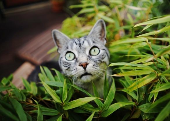 Kat tussen planten