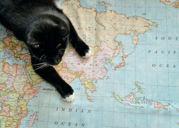 Zwarte kat op wereldkaart