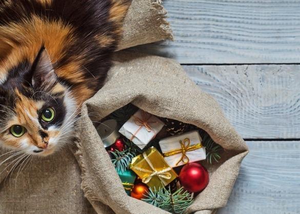 Kat bij een zak kerstcadeaus