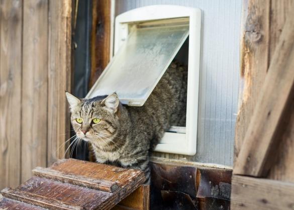 Tijgerkat komt uit kattenluik