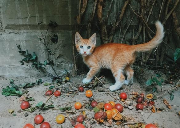 Kattenvoeding: wat heeft jouw kat nodig?