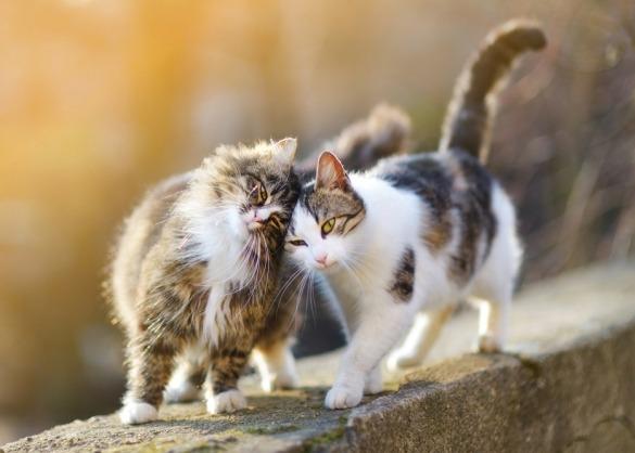 Twee katten lopen innig naast elkaar