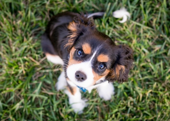 Kies ik voor puppyvoeding of gewoon hondenvoer?