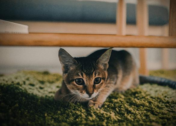 zo maak je je huis kittenproof