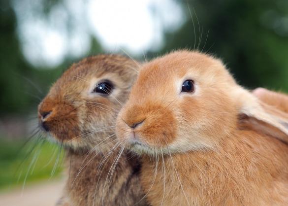 Portret van twee konijnen