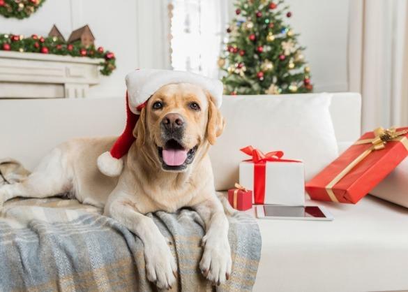 Hond met kerstmuts bij kerstboom en pakjes