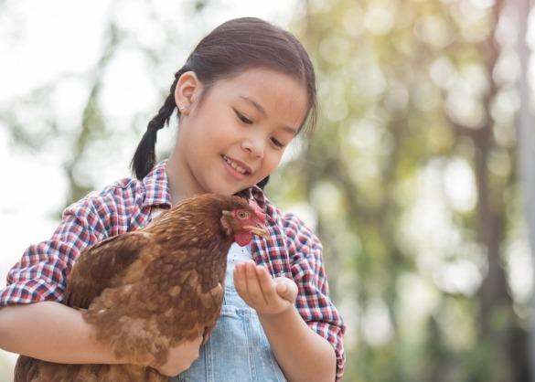 Meisje houdt bruine kip vast om haar te voeren