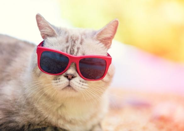 moet_ik_mijn_kat_insmeren_met_zonnebrandcreme