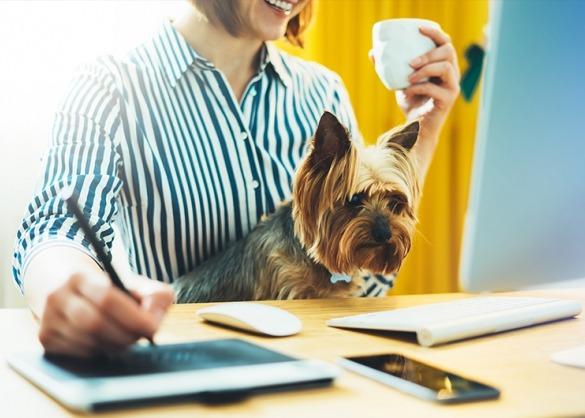 Hond of kantoor.