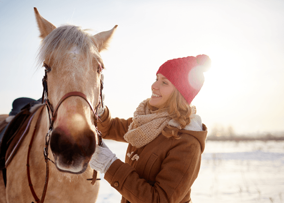 Paard in de winter