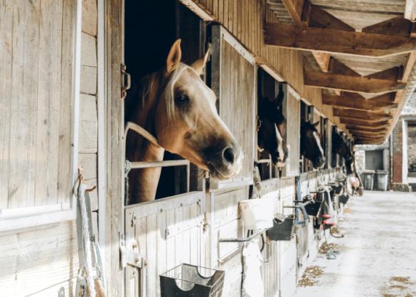 paarden op stal
