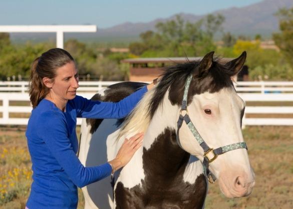 Paint paard wordt gemasseerd door vrouw