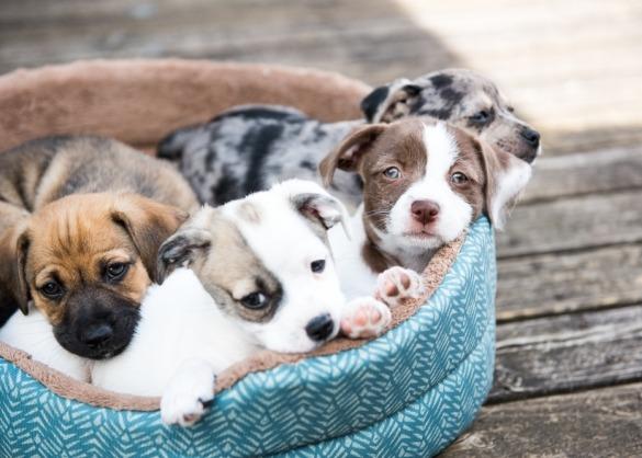 Puppies in een hondenmand