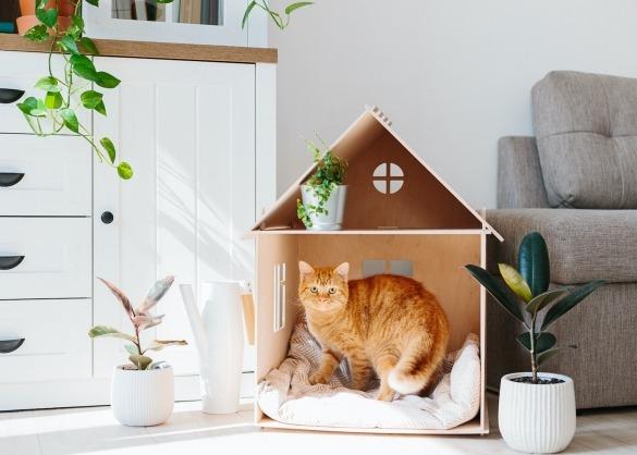 Rosse kat in kartonnen huisje